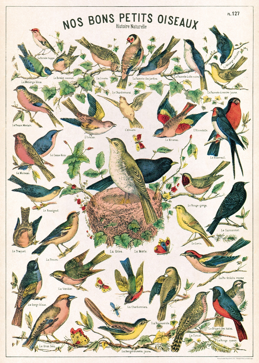 Image for Cavallini Decorative Paper- Bird Chart 20x28 Inch Sheet