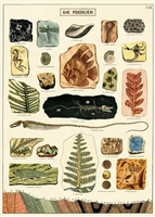 Image for Cavallini & Co. Fossils Decorative Paper Sheet