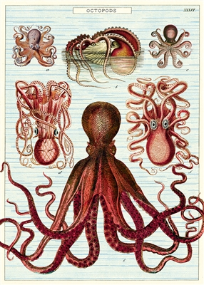"Image for Cavallini Octopod - Octopus Poster - Wrap  20"" x 28"""